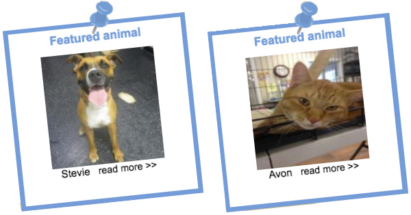 blog_adoptionMHHS dog and cat comp copy